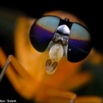 Cool-dude_-This-insect-photographed-by-Rundstedt-Rovillos-in-the-Philippines-looks-like-an-alien-in-sunglasses