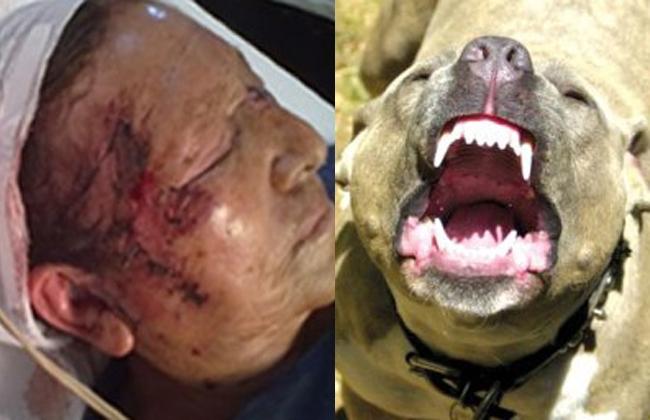 Pitbull mata a su dueño cuando este lo alimentaba, ver video aqui