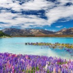 Lake-Tekapo-in-New-Zealand