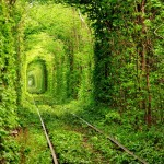 The-Tunnel-Of-Trees