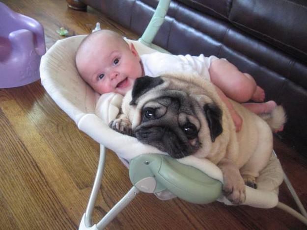 Bebés con perritos - Imagui