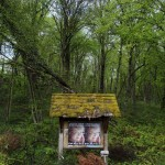Picture taken on April 19, 2012  in a wood near Belfort, eastern France, shows campaign posters of French Green Party