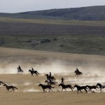 Wranglers gather a herd of horses off the winter range during Montana Horses' annual horse drive outside Three Forks