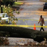 A man walks past a tree, which has fallen over during Hurricane Sandy, in Falls Church