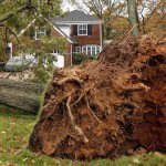 A tree uprooted during Hurricane Sandy is seen next to power lines in Falls Church