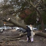 Women try to walk around a fallen tree in the Brighton Beach neighborhood of New York