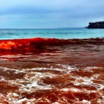 red-beaches-australia-algae-2