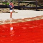 red-beaches-australia-algae-4