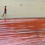 red-beaches-australia-algae-6