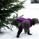 GERMANY-CHRISTMAS-ANIMALS-OFFBEAT