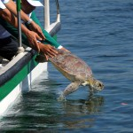 INDONESIA-ANIMAL-CRIME-RELEASE