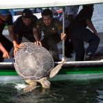 TOPSHOTS-INDONESIA-ANIMAL-CRIME-RELEASE