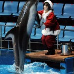 JAPAN-AQUARIUM-CHRISTMAS