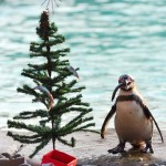 TOPSHOTS-BRITAIN-ANIMALS-ZOO-CHRISTMAS
