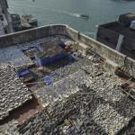 HONG KONG-ENVIRONMENT-SPECIES-SHARK