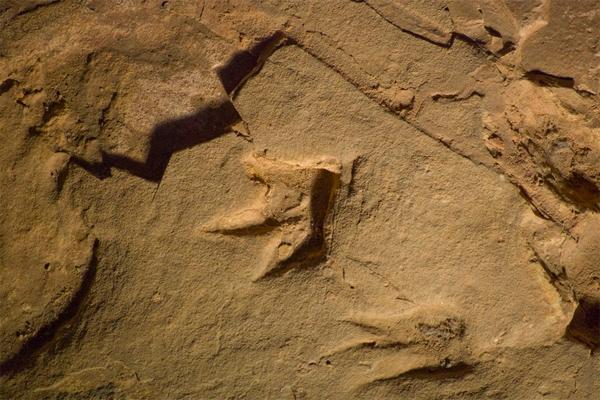dinosaur-prints
