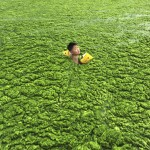 Chinese Water Pollution (10)