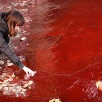 Chinese Water Pollution (11)
