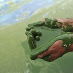 Chinese Water Pollution (13)