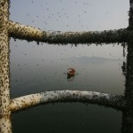 Chinese Water Pollution (21)
