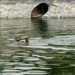 Chinese Water Pollution (4)