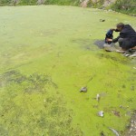 Chinese Water Pollution (6)