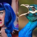 Katy-Perry-Pavo-Real