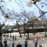 JAPAN-WEATHER-CHERRY BLOSSOM