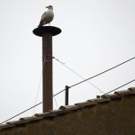 A seagull rests on the chimney of the Sistine Chapel in Saint Peter's Square during the second day of voting for the election of a new pope at the Vatican