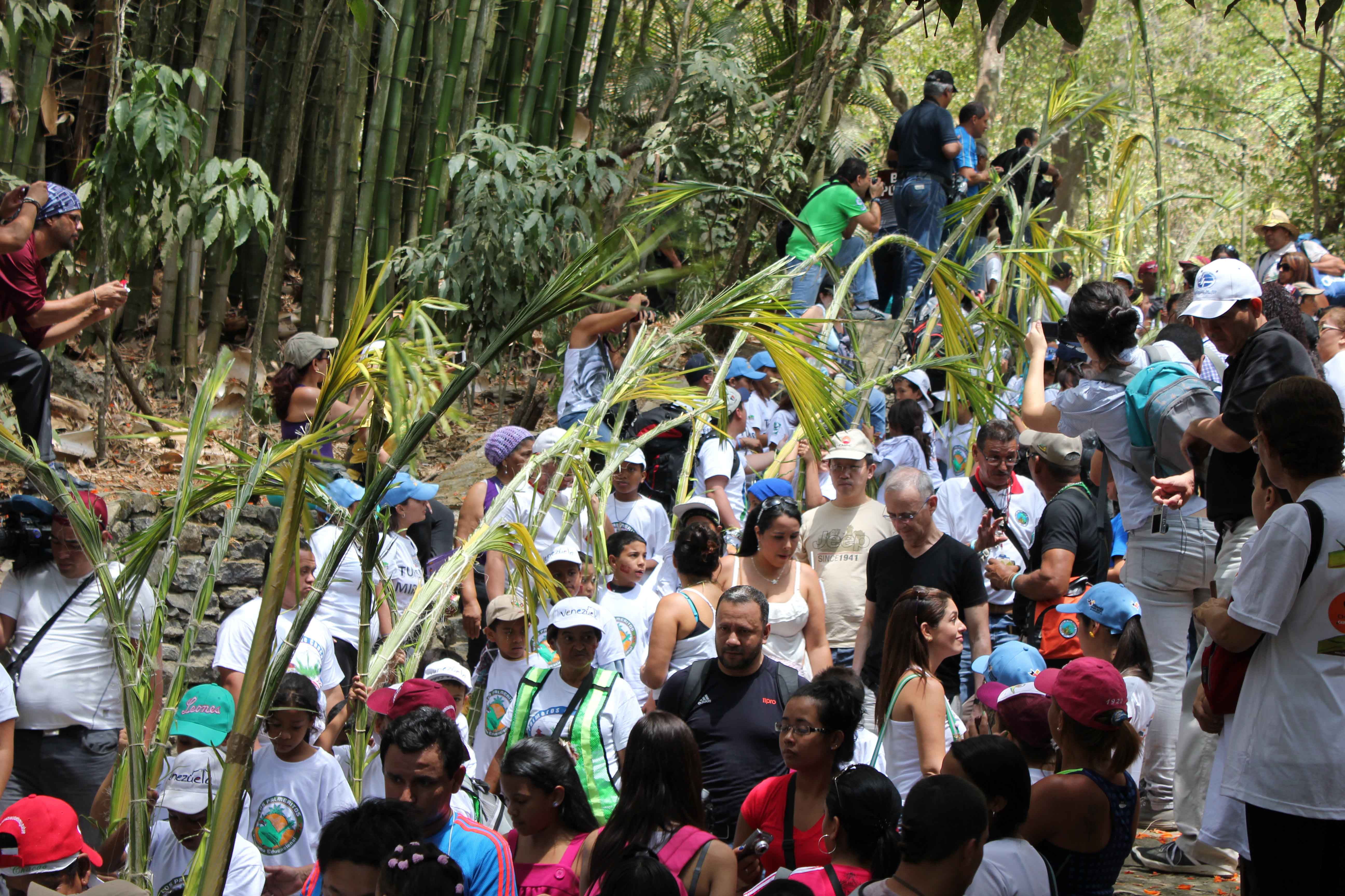 Palmeros de Chacao bajaron este sábado con 750 palmas