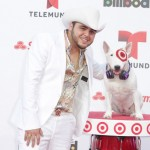 Target's Beloved Bull Terrier Mascot Bullseye Hits The 2013 Billboard Latin Music Awards Red Carpet