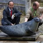GERMANY-ANIMALS-ZOO-SEAL