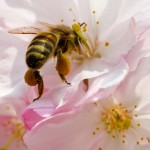 GERMANY-ANIMALS-BEE-WEATHER-FEATURE