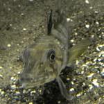 JAPAN-SCIENCE-FISH