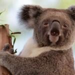 AUSTRALIA-ANIMAL-CONSERVATION-ZOO