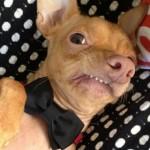 Tuna perro4