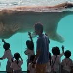 SINGAPORE-ANIMAL-ZOO-POLAR BEAR