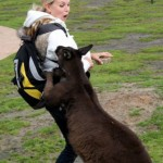 Animals-attacking-women12
