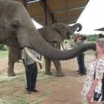 Animals-attacking-women14