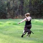 Animals-attacking-women18