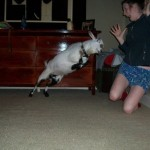 Animals-attacking-women4