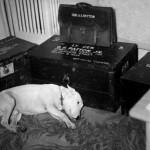 El perro del General Jorge S. Patton sufre la muerte de su amo.