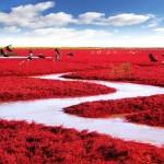 Playa roja (China)
