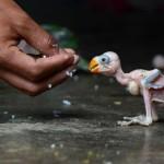 INDIA-ANIMAL-PARROT