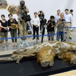 JAPAN-MAMMOTH-ANIMAL-EXHIBITION