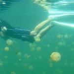 Lago de las medusas, Palaos