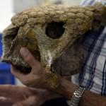Paleontólogo Ascanio Rincón Foto (AFP)