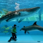 JAPAN-ANIMAL-FISH-AQUARIUM