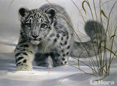 YO ESTOY CONTRA EL MALTRATO ANIMAL - Página 2 81cd32_leopardo-de-las-nieves