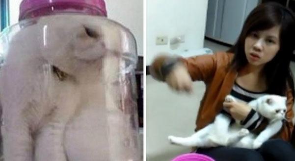 YO ESTOY CONTRA EL MALTRATO ANIMAL - Página 2 Gata-en-botella